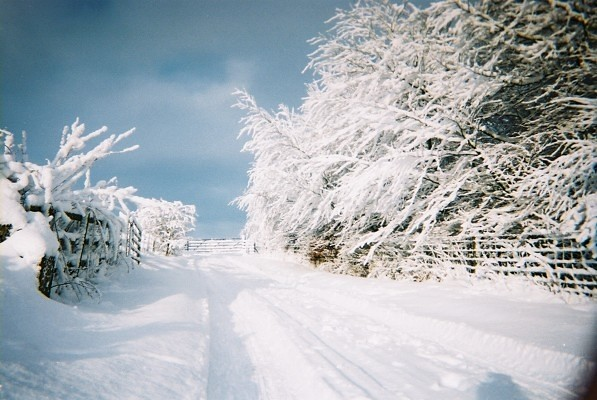 Wintery view of road, trees and gateway with very thick snow