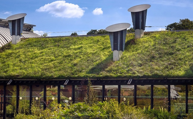 building with a grass roof