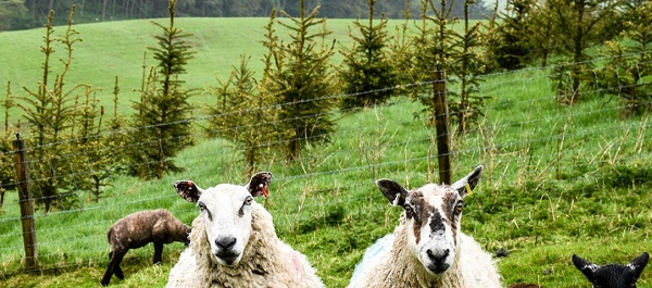 Trees to Improve your farm -Soil Association