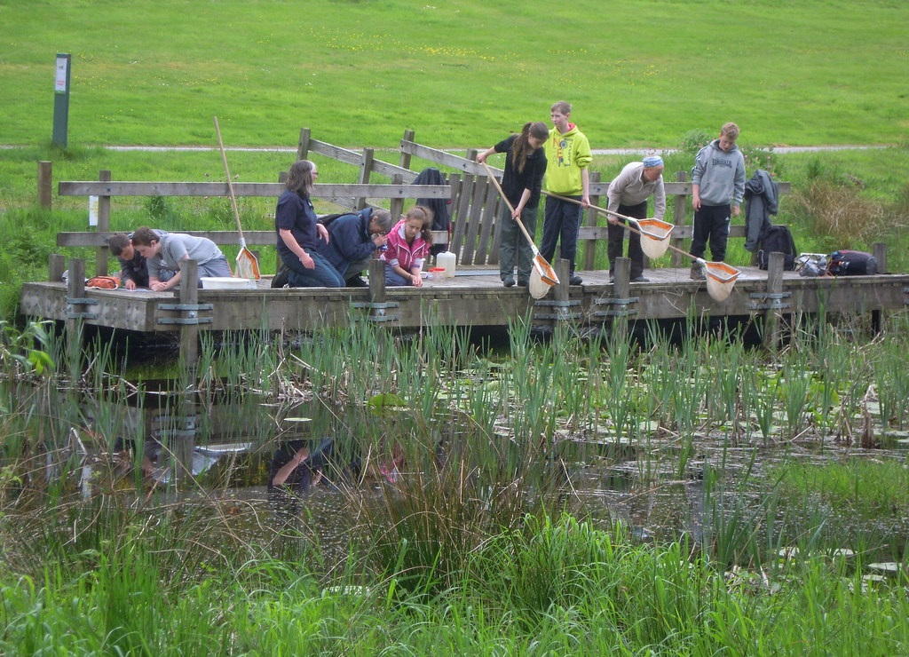 Teenagers with nets pond dipping