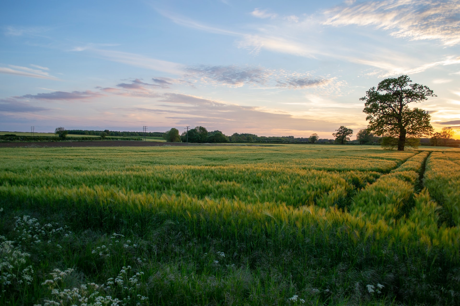 Grass field at sunset. Credit. Simon Godfrey, Unsplash