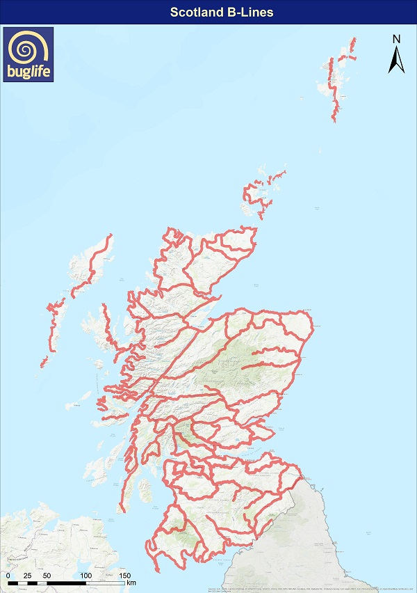 Scotland B-Lines (logo)