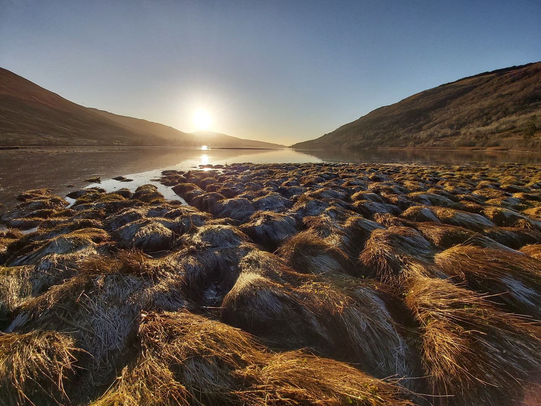 Saltmarsh at the head of Loch Fyne, Argyll - credit professor Bill Austin