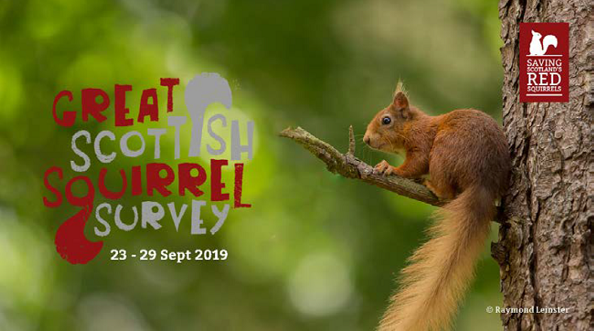 Red squirrel in tree with text 'Great Scottish Squirrel Survey'