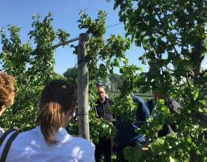 People looking and learning how to grow fruit