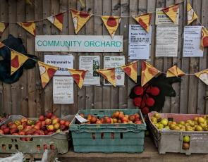 Baskets filled with apples from a community orchard