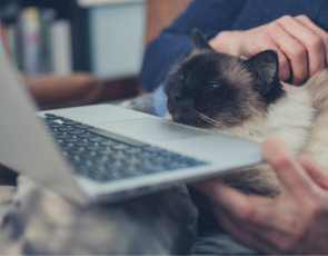 Person sitting with laptop and cat