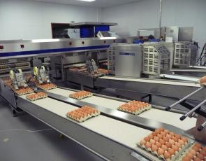 egg production at Aberdeen & Northern Eggs