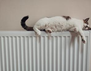 Cat on a radiator