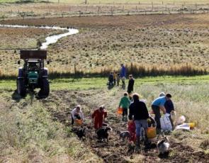 people working in croft field