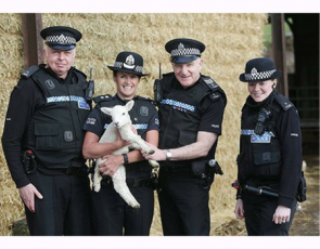 police officers holding a lamb