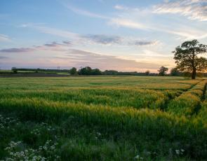 Grass field at sunset. Credit. Simon Godfrey, Unsplash