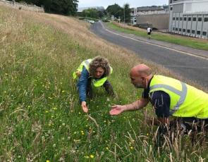 Wildflowers at the North Haugh at the University of St Andrews & new Meadows in the Making project staff Stephen Paul, Practical Conservation Worker, & Johanna Willi, Ecological Projects Manager