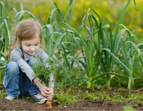 Girl planting vegetables in garden