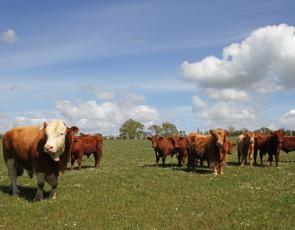 Cattle on Williamwood Farm, Scotland. Photographer - Matt Cartney. Crown Copyright.