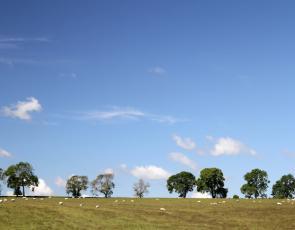 Sheep grazing in a field in the Scottish Borders. Photographer - Matt Cartney - Crown Copyright.