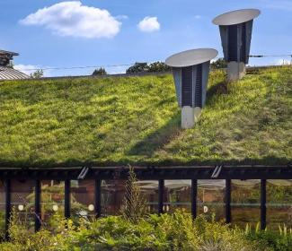 grass roofed building
