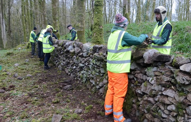 Forestry apprentices work in pairs on wall