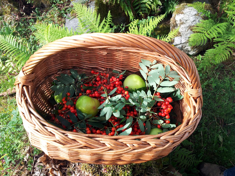 Fun with Fruit and Fungi at The Scottish Crannog Centre