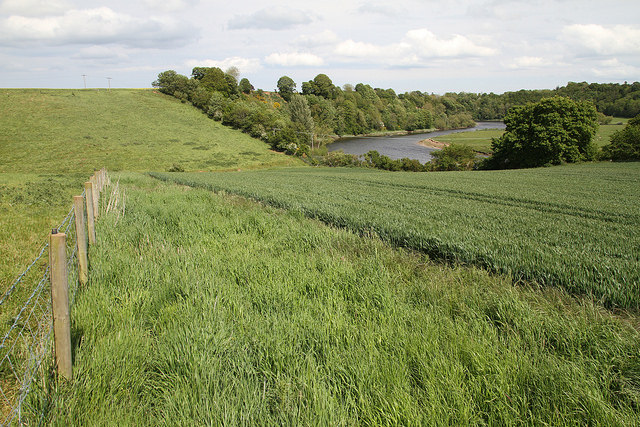 Field with trees and river