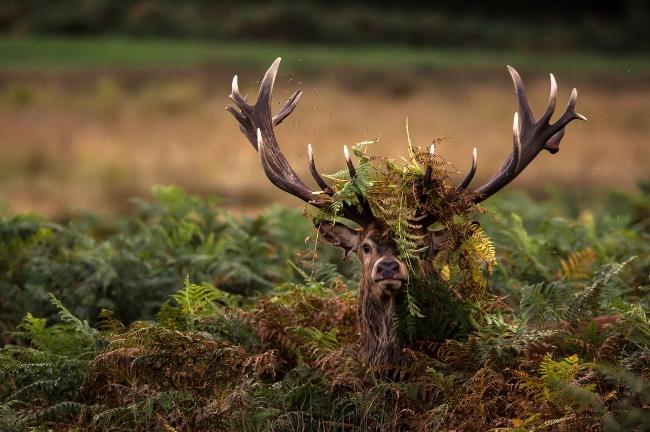 Worldwide Wildlife winner - Hide 'n' Seek by Christopher Mcleod