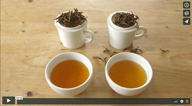Cups of tea and tea leaves - screenshot from Tea Gardens of Scotland video