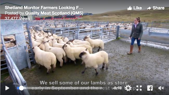SCreenshot from Shetland Monitor Farm video