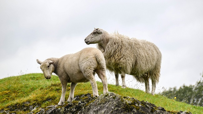 little sheep group case study Read the case study titled, integrative case 1: 3i group's private equity  that  little sheep catering chain co should take based on your swot analysis.