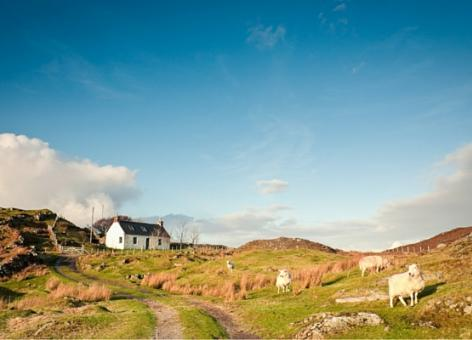 croft house landscape with sheep