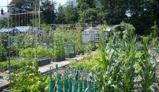 Allotment style gardens