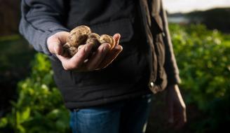 Farmer holding potatoes