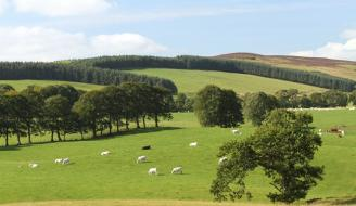 Field with trees and cows