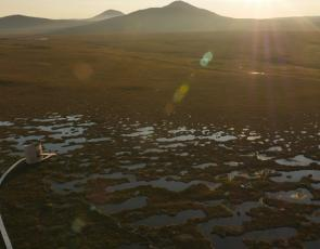 Flow country landscape