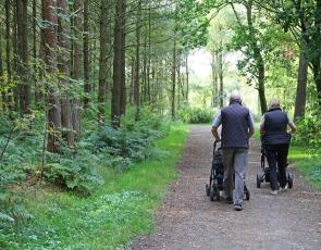 People pushing prams on forest path