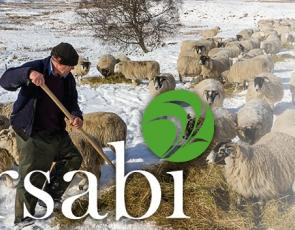 Farmer in snowy field with sheep and 'RSABI'