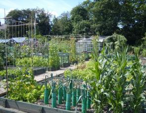 Allotment style gardens
