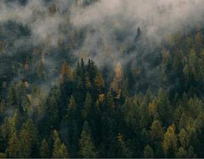Overhead shot of misty forest