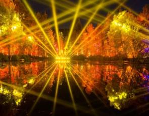Lights shining in forest