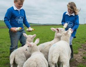 Children feeding lambs