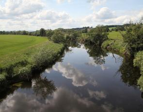 River with trees and field
