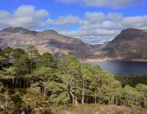 Scots pines at Beinn Eighe National Nature Reserve ©Lorne Gill SNH