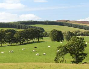 Field with trees and livestock