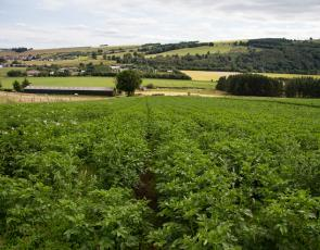 Potato field, Crown copyright. Photographer - Barrie Williams