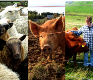 Collage of crofting images