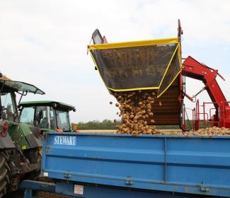 potatoes being emptied into trailer attached to tractor